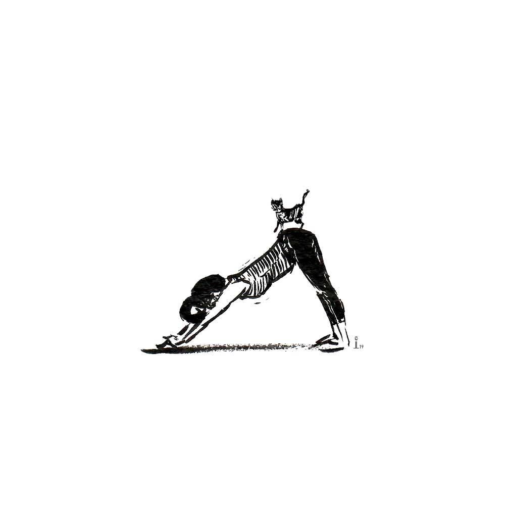 Yoga mit Katze Herabschauender Hund