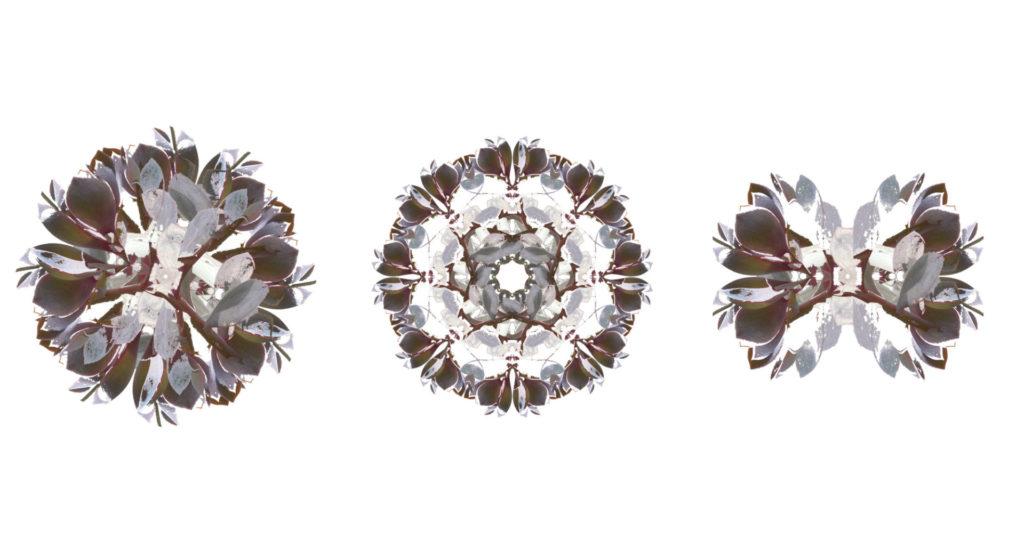 Verschiedene Mandalas aus Blütenblättern © Johanna Leitner